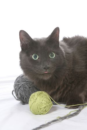 naughty black cat with balls of yarn and a surprised look on its face Stock Photo