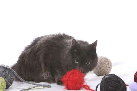 糸の散乱のボールの中の猫 写真素材 - 3493465