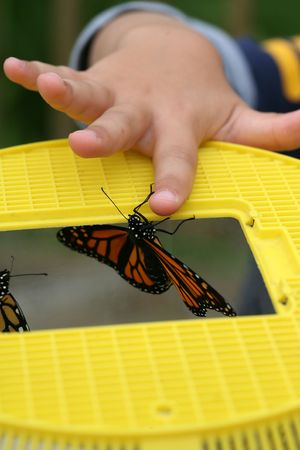 monarch butterfly emerging from a yellow cage while a small child helps