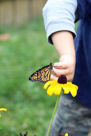 茶色の目をしたスーザン花の若い子 puttig モナーク蝶 写真素材