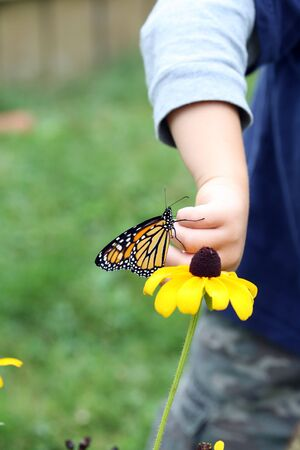 susan: young child puttig monarch butterfly on a brown eyed susan flower
