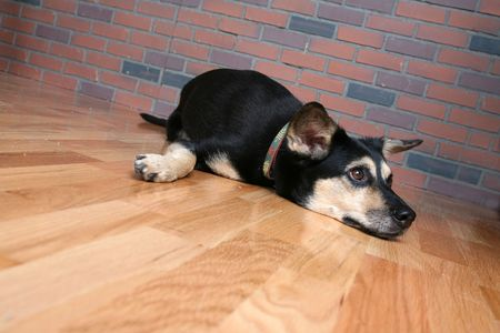 dog stretched out on wood floor and looking sad