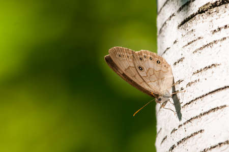 appalachian: Appalachian Brown Stock Photo