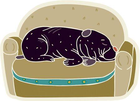 terrestrial mammals: A cute black dog sleeping on a sofa Stock Photo