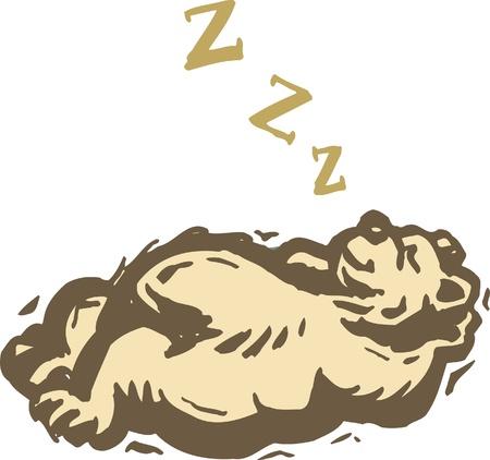 Een beer een dutje