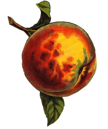 imagezoo: a peach Stock Photo