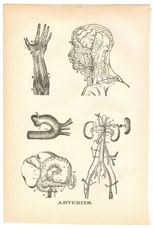 Illustrations of arteries from a vintage medical book Imagens