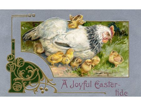 A vintage Easter postcard of a hen and chicks photo