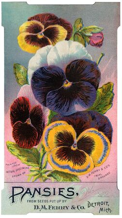 Antique image of pansies seed packet Фото со стока
