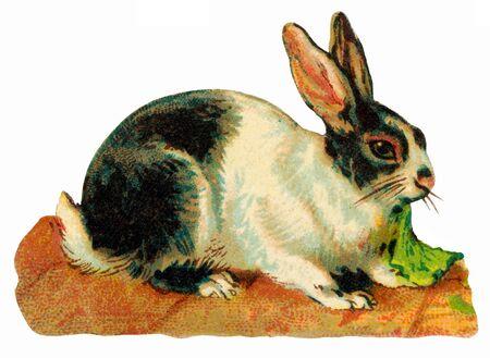 Antique image of rabbits
