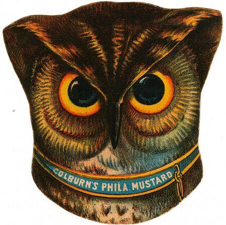 western theme: owl