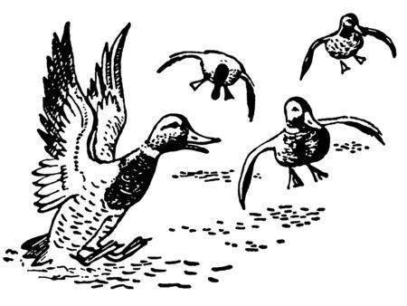 アヒルの池での着陸