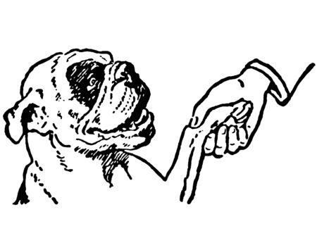 A black and white version of a cleaver Bulldog shaking hands with its owner Stock Photo
