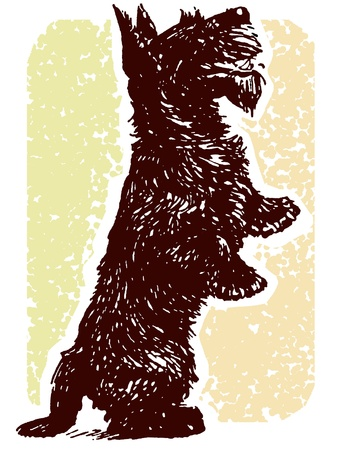 A black Scottish Terrier standing on its hind legs