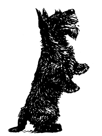 A black and white version of a black Scottish Terrier standing on its hind legs photo