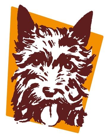 scottish terrier:  A portrait of a Scottish Terrier