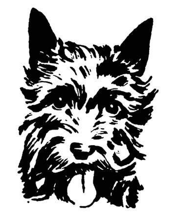 panting:  A black and white version of a portrait of a Scottish Terrier