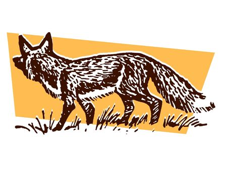 walking away:  An illustration of a prowling fox
