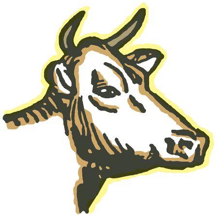A portrait of a bull