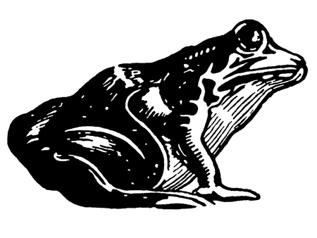 A black and white version of an illustration of a toad illustration