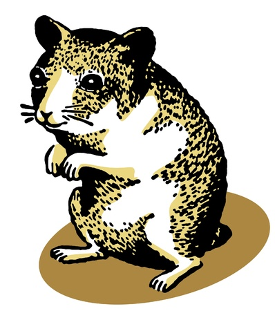 hamsters:  An illustration of a hamster standing on its hind legs