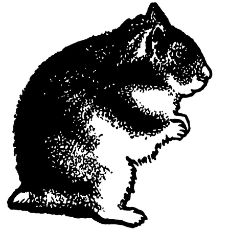 hind:  A black and white version of an illustration of a hamster standing on its hind legs Stock Photo