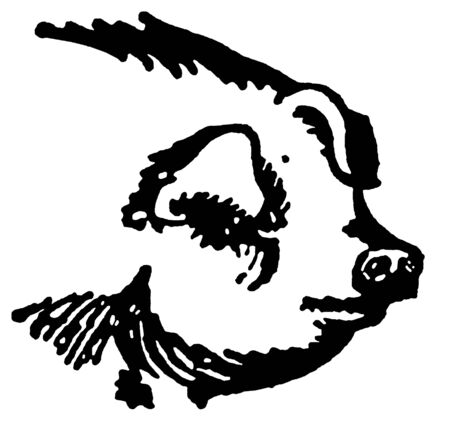A black and white version of a portrait of a large pig Imagens