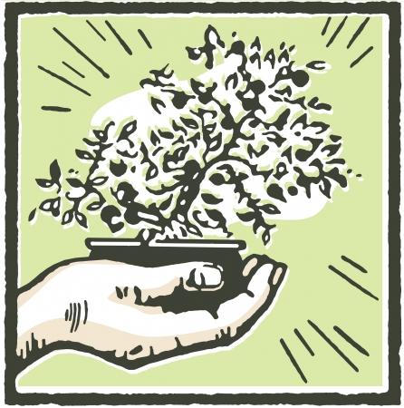 A print of a hand holding a Bonsai tree photo