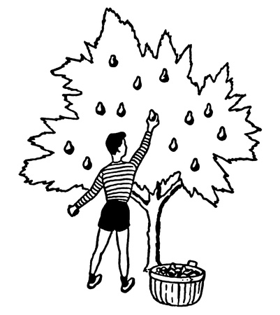 A black and white version of an illustration of a young boy picking apples from a tree