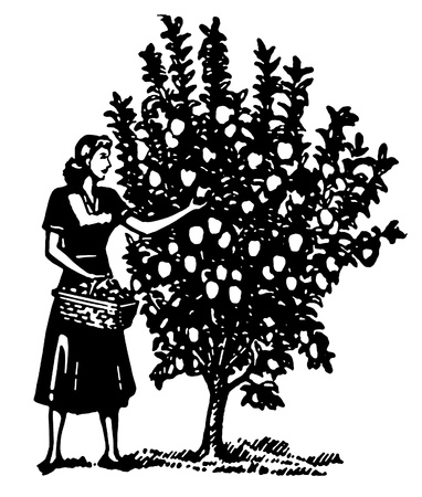 A black and white version of a woman picking apples from a tree