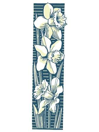 drawings image: A cluster of Daffodils