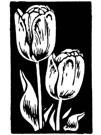 A black and white version of a vintage print of Tulips Stok Fotoğraf
