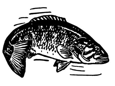 A black and white version of an illustration of a fish illustration