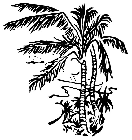 A black and white version of an illustration of Palm covered beaches illustration