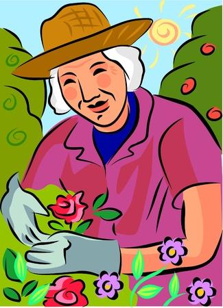 woman gardening: An elderly woman gardening