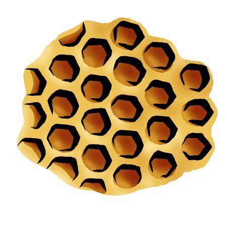 honeycomb Stock Photo - 15209380