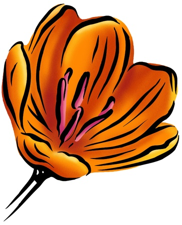 An orange tulip Stock Photo - 15209419