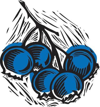 블루 베리 스톡 콘텐츠 - 15208973