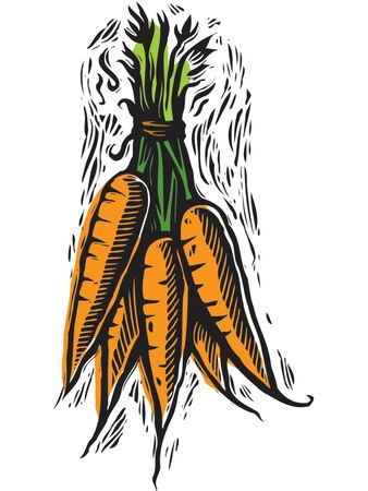 fresh picked carrots Stock Photo - 15208673