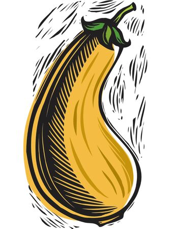 imagezoo: yellow squash