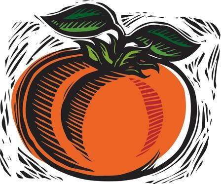 fresh tomato Stock Photo - 15209108