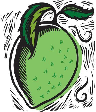 imagezoo: ripe lime