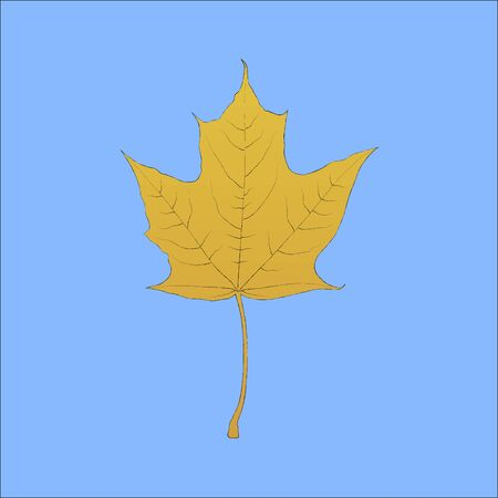 etched: Detailed hand drawn maple yellow autumn leaf on sky blue background Illustration