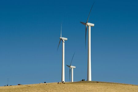 altamont pass: Cows are dwarfed by gigantic windmills.
