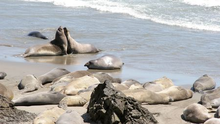 blubber: Two seals get up-close and personal.