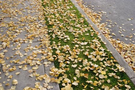 sidewall: A sidewalk, nature strip, curb, and street - all covered by fall leaves. Stock Photo