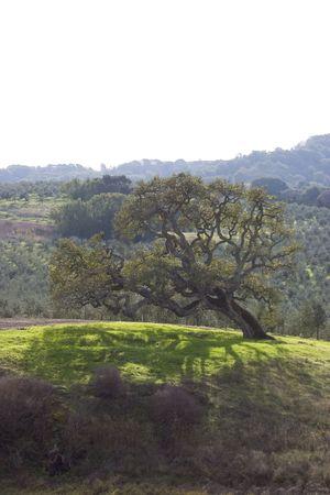 Oude boom op heldere patch van groene gras