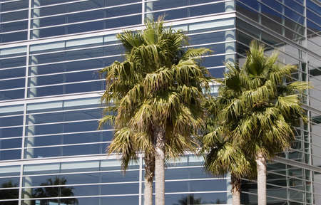 A new metal and glass biotech building in San Franciscos new Mission Bay development. Palm trees add a tropical look to the scene.  Banco de Imagens