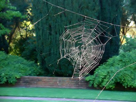 A spider web catches the sunlight Фото со стока