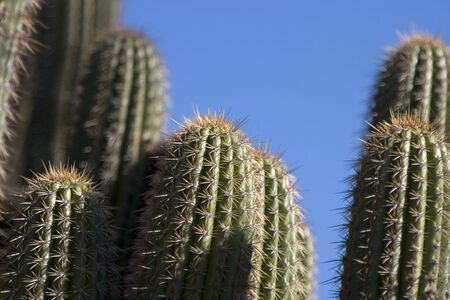 A cactus with lots of sharp points.